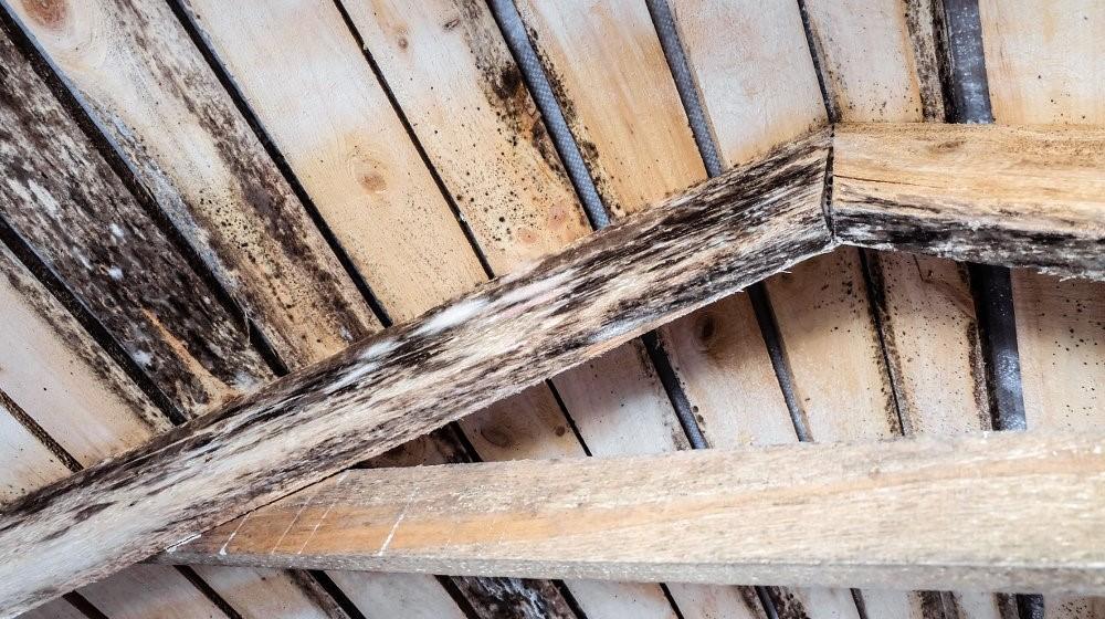 Soffitto in legno coperto di muffa
